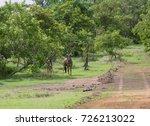 wildebeest seen during a safari ... | Shutterstock . vector #726213022