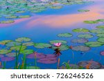abstract landscape of lotus... | Shutterstock . vector #726246526