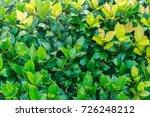 green leaf wall background | Shutterstock . vector #726248212