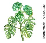 green monstera leaf isolated on ... | Shutterstock . vector #726323332