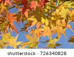 autumn leaves | Shutterstock . vector #726340828