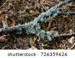 a trunk with white fungi... | Shutterstock . vector #726359626