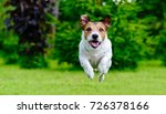 dog jumping straight forward at ... | Shutterstock . vector #726378166