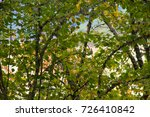 autumn texture. leaves of red ... | Shutterstock . vector #726410842