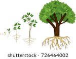 sequential stages of growth of... | Shutterstock .eps vector #726464002