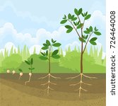 sequential stages of growth of... | Shutterstock .eps vector #726464008