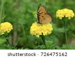 marigolds with a butterfly | Shutterstock . vector #726475162