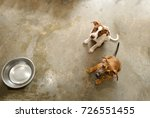 dog shelter is an animal... | Shutterstock . vector #726551455