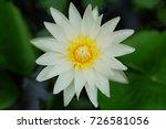 macro shot of a lotus flower .   Shutterstock . vector #726581056
