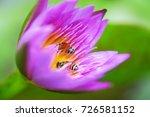 macro shot of a lotus flower .   Shutterstock . vector #726581152