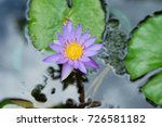 macro shot of a lotus flower .   Shutterstock . vector #726581182