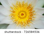 macro shot of lotus flower.   Shutterstock . vector #726584536