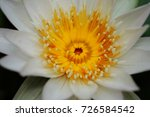 macro shot of lotus flower.   Shutterstock . vector #726584542