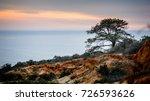 a lone torrey pine tree stands... | Shutterstock . vector #726593626
