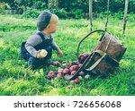 little boy with basket apples... | Shutterstock . vector #726656068