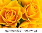 Yellow Roses In Full Frame
