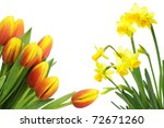 spring flowers isolated on white | Shutterstock . vector #72671260