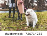 white dog on leash at park with ... | Shutterstock . vector #726714286
