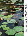 Small photo of Lilly Pond