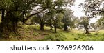 fanal old laurel trees location ... | Shutterstock . vector #726926206