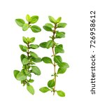 thyme fresh herb isolated on... | Shutterstock . vector #726958612