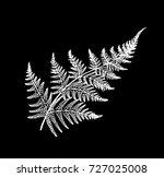 black and white fern... | Shutterstock .eps vector #727025008