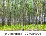 thick forest with lots of thin... | Shutterstock . vector #727084006