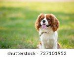 Portrait Of A Dog Cavalier Kin...
