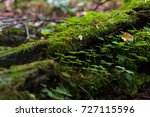Forest. Moss Covering The...
