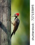 Woodpecker From Costa Rica ...
