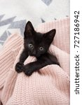 Stock photo black kitten playing with pink sweater 727186942