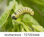 very small second instar... | Shutterstock . vector #727201666