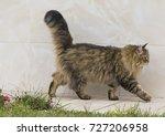 Beauty Cat Walking In The...