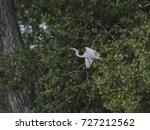Egret Flying Through The Trees