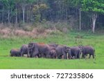 Small photo of Group of alive asia wild elephant assembly as big family have young, adult and old elephants, they are eating mineral salt from the soil on the green grass near the forest