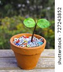 Small photo of Nature strikes back. Aluminum pop tops on a vase with a bib tropical baby tree (Aleurites moluccana).