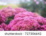 flowers.awakening.morning in my ... | Shutterstock . vector #727306642
