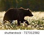 Brown Bear In The Flowering Bo...