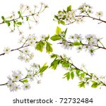 Cherry Tree Flowers Collection...