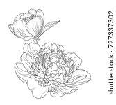 peony rose blooming garden...   Shutterstock .eps vector #727337302