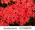 needles red flowers in the... | Shutterstock . vector #727358995