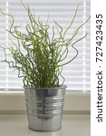 Green Plant On A Metallic Pot....