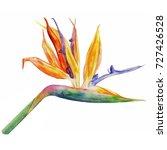 Bird Of Paradise Flower ...