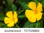 yellow flower on green... | Shutterstock . vector #727528882