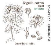 sketch of a nigella sativa... | Shutterstock .eps vector #727534408