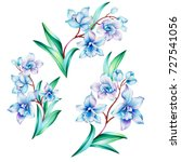 orchid branch with flowers ... | Shutterstock . vector #727541056