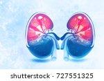 human kidney cross section on... | Shutterstock . vector #727551325