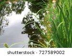 swimming garden pond  natural... | Shutterstock . vector #727589002