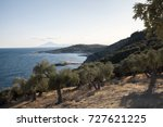 olive trees grove on grece... | Shutterstock . vector #727621225