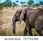 elephant on the savannah in... | Shutterstock . vector #727701382